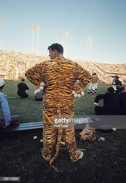 Rear view of Louisiana State mascot Mike the Tiger on sidelines during game vs Mississippi at Tiger Stadium Baton Rouge LA CREDIT Neil Leifer