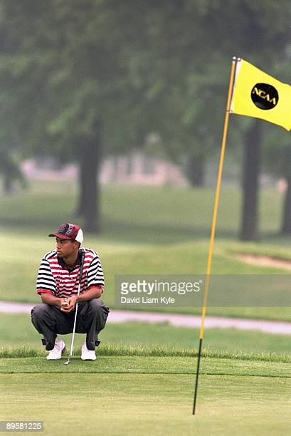NCAA Championship Stanford Tiger Woods in action lining up putt at Ohio State University Golf Course Columbus OH 6/1/1995 CREDIT David Liam Kyle