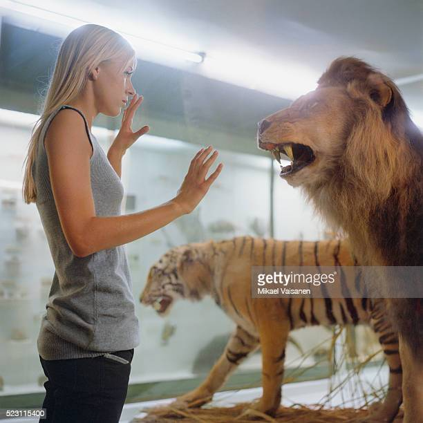 college student looking at big cats in a museum - natural history museum stock pictures, royalty-free photos & images