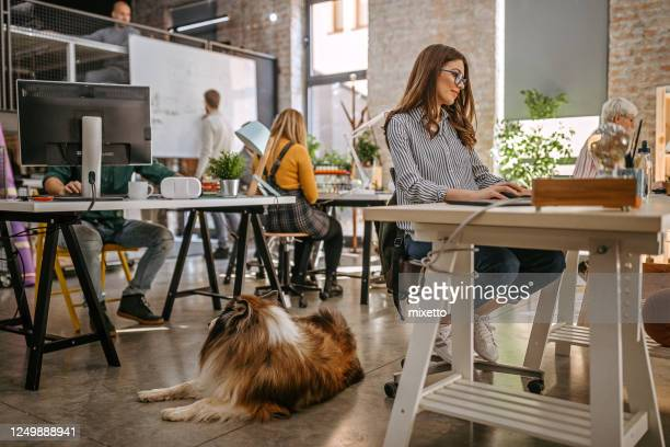 collie dog resting in office around people - cultures stock pictures, royalty-free photos & images