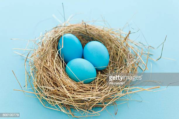 coloful easter eggs in nest, studio shot - birds nest stock photos and pictures