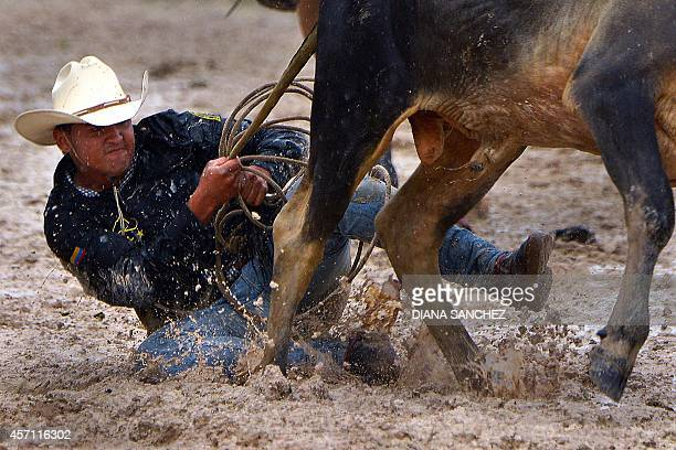 A Colombian cowboy pulls the tail of a steer in an attempt to knock it over during the 18th Coleo World Championship in Villavicencio Meta department...