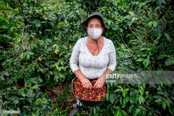 colombian farmer working at a coffee farm wearing a facemask - colombia stock pictures, royalty-free photos & images