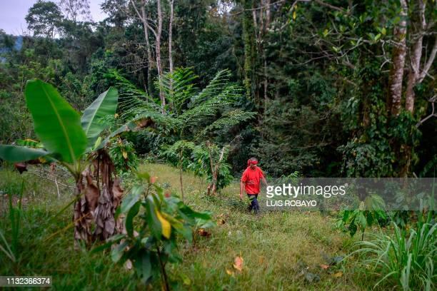 Colombian Luis Portilla walks amid cocoa crops, at his farm, in the Catatumbo region, Norte de Santander department, in Colombia, on February 8,...