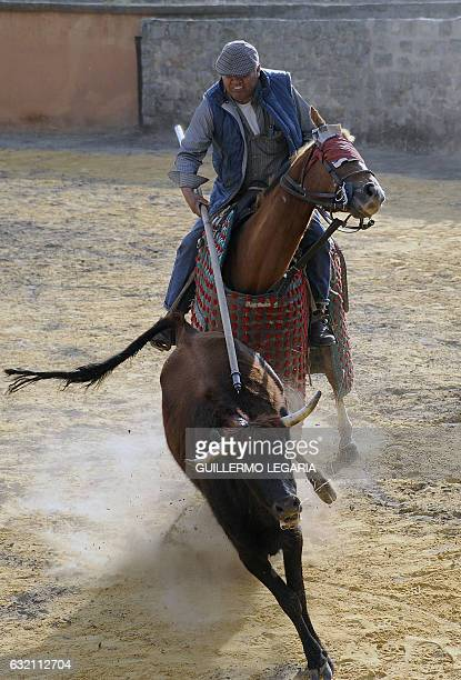 Colombian picador Cayetano Romero jabs a bull during a bullfighting training session at the Mondoñedo's fighting bulls ranch La Holanda the oldest in...