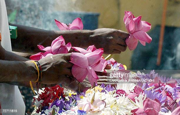 A Sri Lankan girl offers flowers at a Buddhist temple in Colombo 04 December 2006 as the country marked the Induwap Poya or full moon day Buddhists...