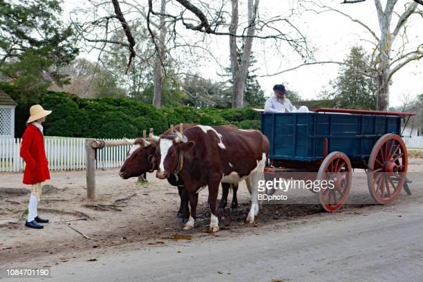 kolonialen akteuren in williamsburg, virginia - ox cart stock-fotos und bilder