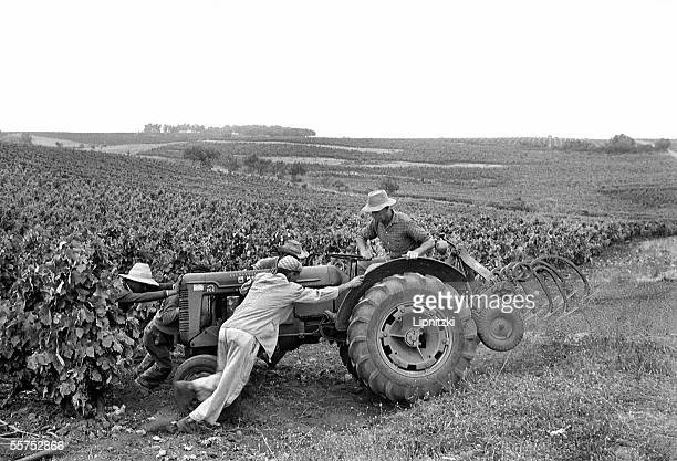 Colonist in the vineyards with Algerian farm labourers Algeria in June 1958 LIP33562037
