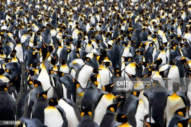 colony of emperor penguins - pinguïn stockfoto's en -beelden