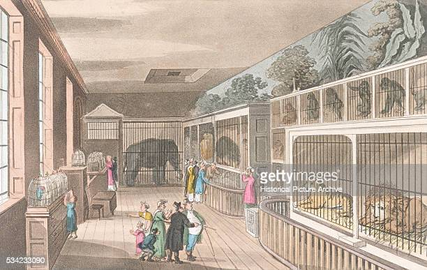 A color aquatint of London's Royal Menagerie 1816 | Location Exeter Change Strand London England UK
