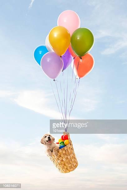 Farbe ballons