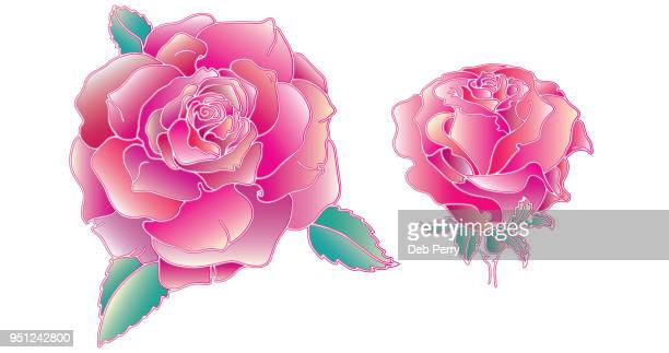 Color drawing of roses