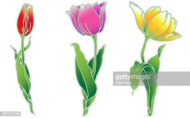 Color drawing of tulips