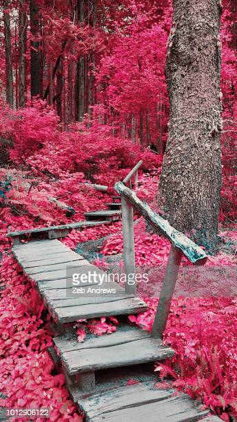 Color infrared image of a path leading through a forest