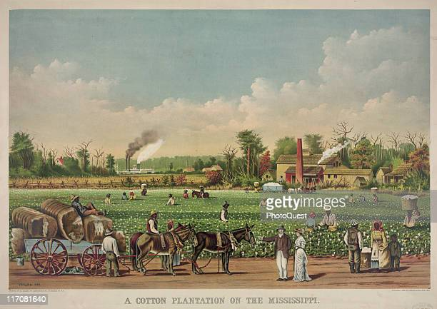 A color lithograph depicting an agricultural scene on a cotton plantation on the Mississippi 1884 Print by Currier and Ives