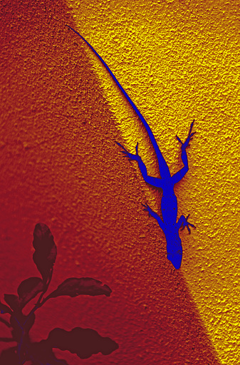 Color manipulated photo of a lizard on concrete post converting brown to blue - gettyimageskorea