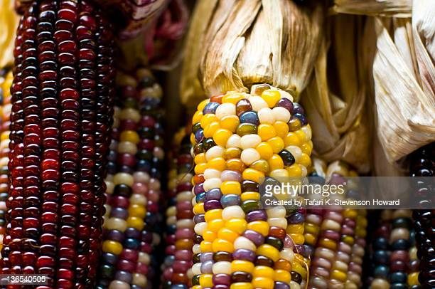 color of harvest - indian corn stock photos and pictures