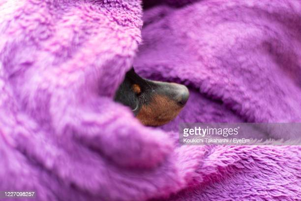color redefining / minimalism moment of dog - koukichi stock pictures, royalty-free photos & images