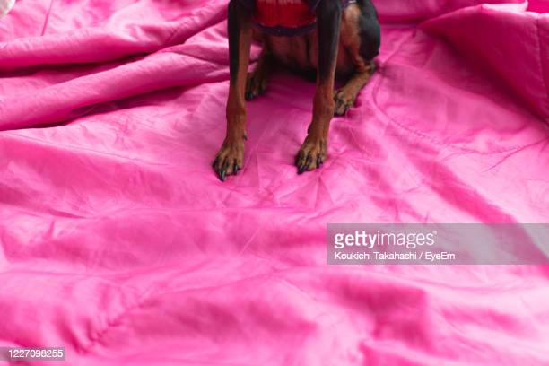 color redefining pink /exceptional normalcy of dog - koukichi stock pictures, royalty-free photos & images