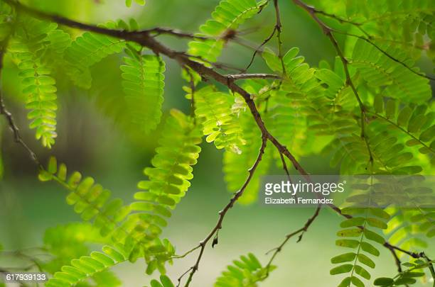 Color Stories - Green
