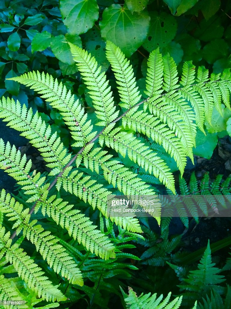 Color Stories - Green : Stock Photo