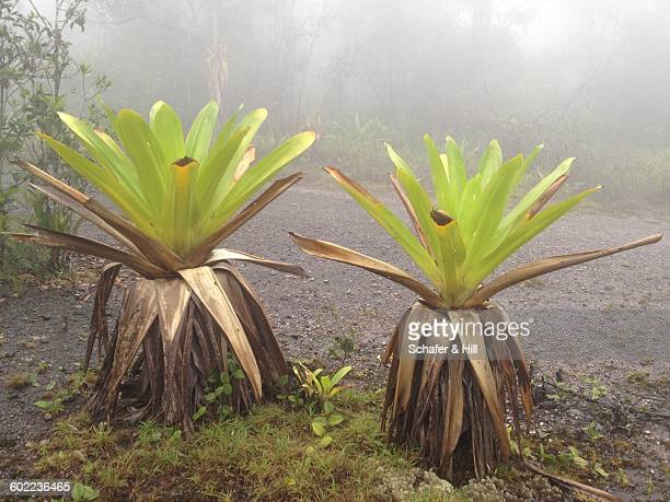 color stories - grey  - bromeliad stock photos and pictures