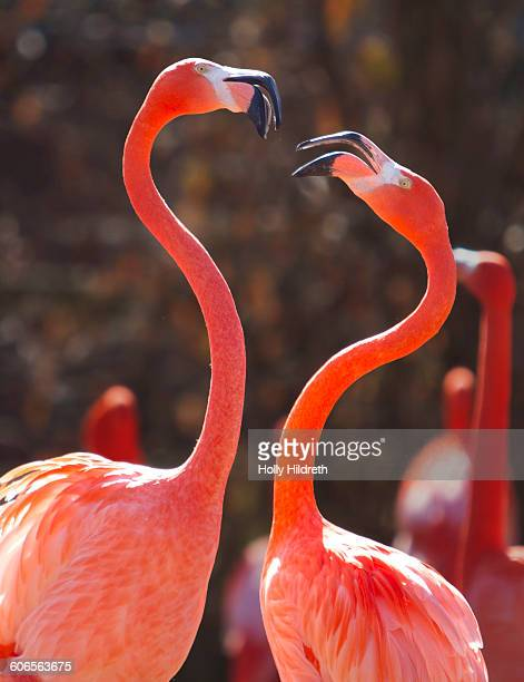 color stories - pink - flamingo heart stock pictures, royalty-free photos & images