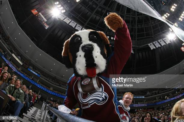 Colorado Avalanche mascot Bernie performs during the game against the St Louis Blues at the Pepsi Center on March 6 2010 in Denver Colorado The...