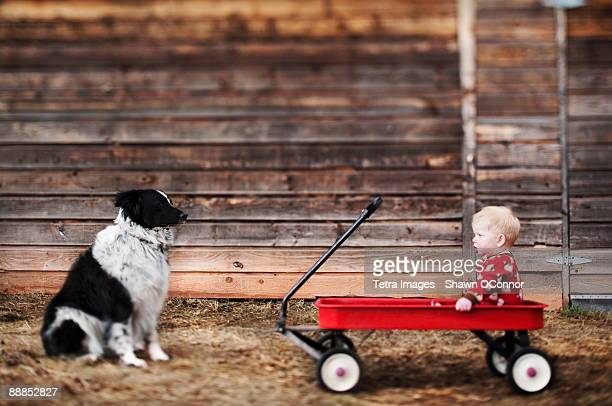 usa, colorado, carbondale, baby sitting in cart and watching dog - toy wagon stock photos and pictures