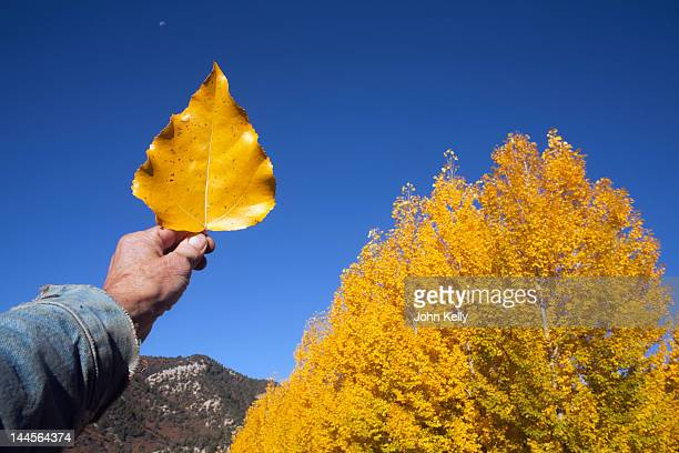 USA, Colorado, Hand holding yellow leaf against blue sky