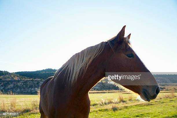 USA, Colorado, Horse on field