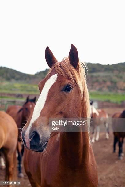 USA, Colorado, Horses on field