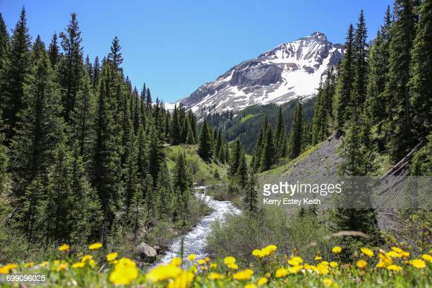 a colorado mountain creek flows down from snow-capped mountains in the san juan national forest - kerry estey keith stock photos and pictures