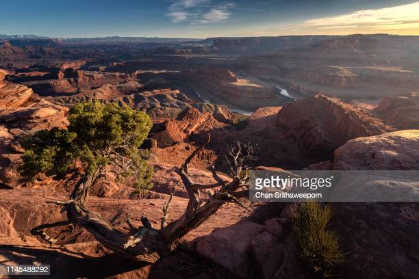 colorado river at dead horse point state park, moab, utah, usa - dead horse point state park stock pictures, royalty-free photos & images