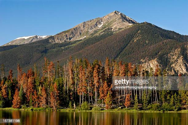 colorado rockies - silverthorne stock photos and pictures
