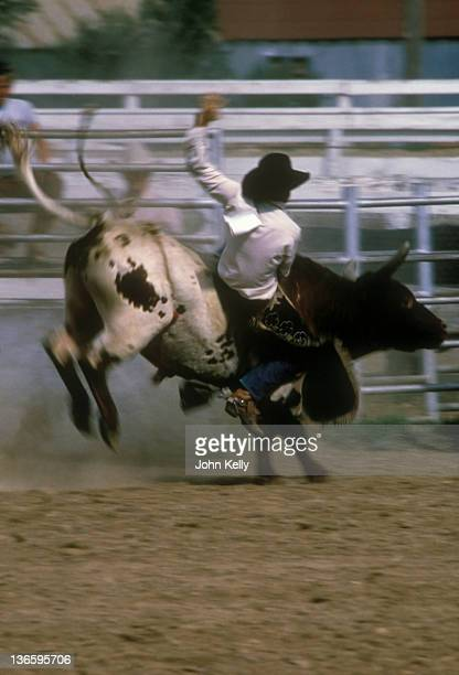usa, colorado, rodeo rider in action - livestock show stock pictures, royalty-free photos & images