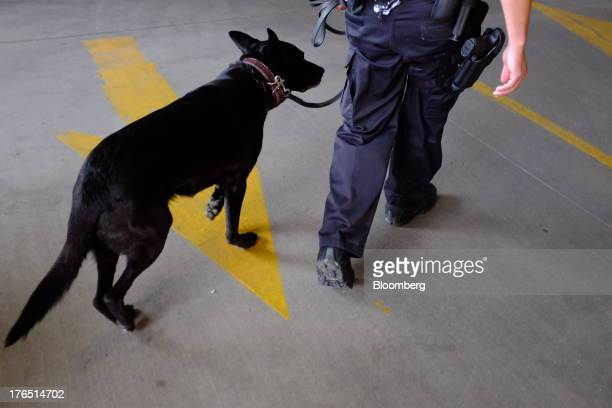 Colorado Springs Police Officer Andrew Genta and his dog Vader, a Belgian Malinois, demonstrate a narcotic search on a vehicle in Colorado Springs,...