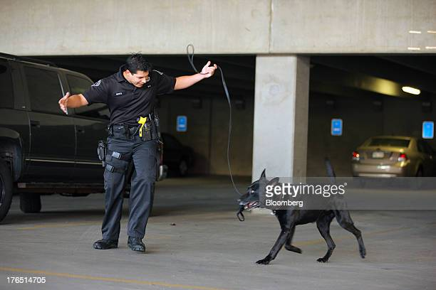 Colorado Springs Police Officer Andrew Genta rewards his dog Vader, a Belgian Malinois, after a successful demonstration of a narcotic search on a...