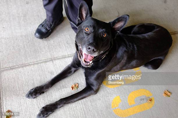Colorado Springs Police Officer Andrew Genta unseen stands with his dog Vader a Belgian Malinois after demonstrating a narcotic search on a vehicle...