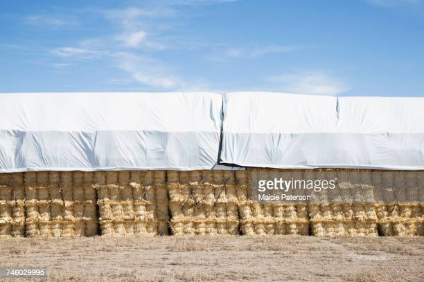 usa, colorado, stack of hay covered with tarpaulin - tarpaulin stock pictures, royalty-free photos & images