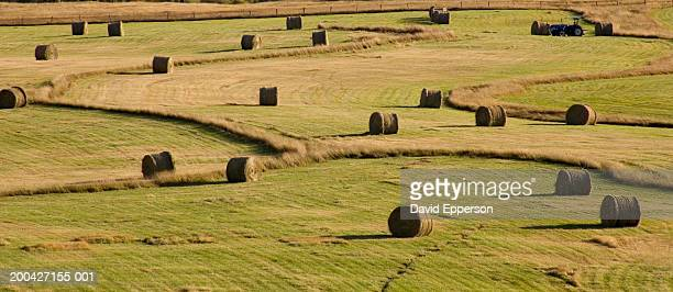 usa, colorado, steamboat springs, hay rolls in field - steamboat springs colorado stock photos and pictures