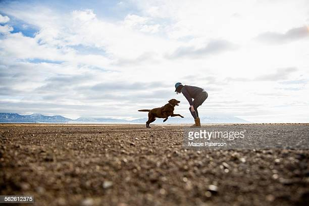 usa, colorado, woman playing with dog outdoors - chocolate labrador stock pictures, royalty-free photos & images