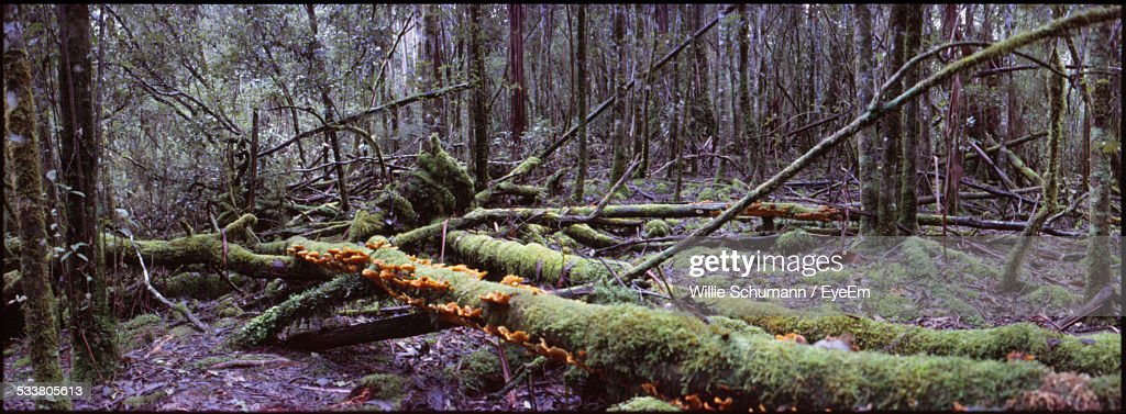 Colored Image Of Forest And Timber With Fungus : Foto stock