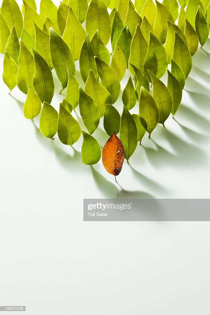 Colored leave in the front of  leaves : Stock Photo
