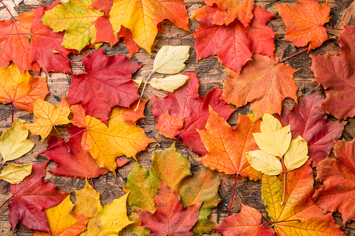 colored leaves on wooden board 975178324