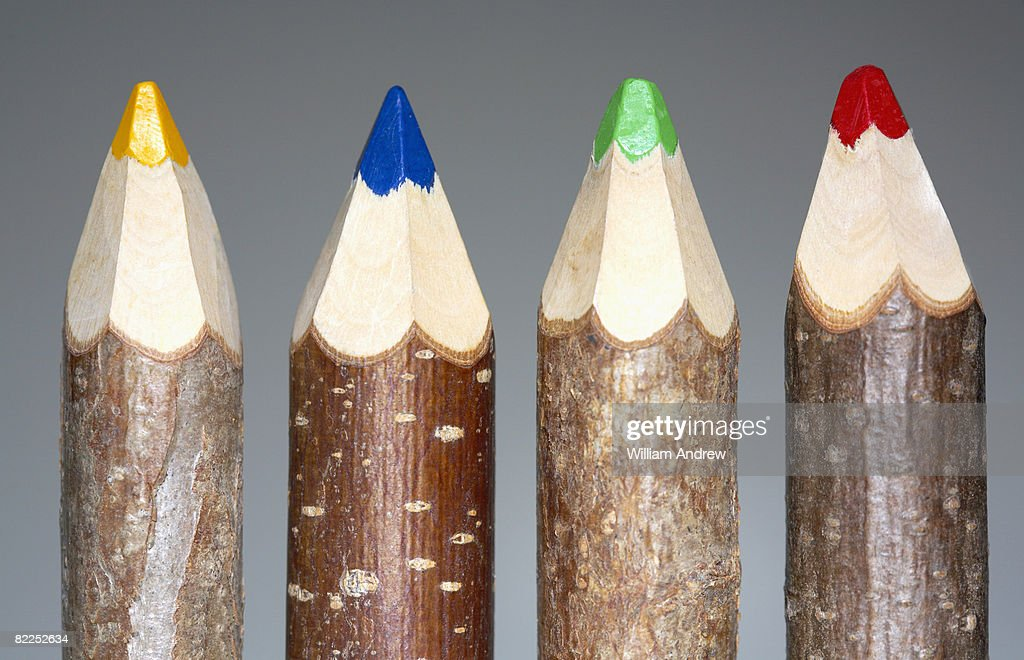 Colored pencils made out of branches : Stock Photo