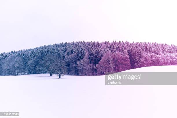 Colored winter landscape, Germany