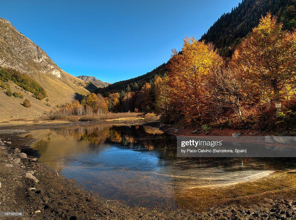 Fotos Otoales. Latest Autumn Leaves Of Acacia Hojas Otoales De ...
