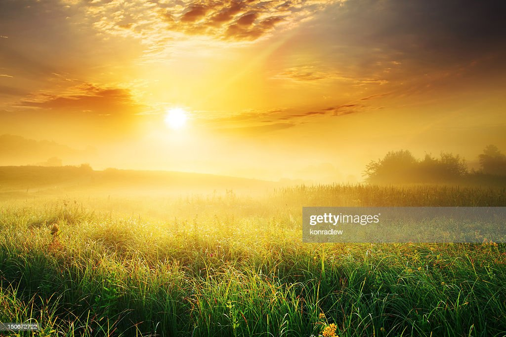 Colorful and Foggy Sunrise over Grassy Meadow - Landscape : Stock Photo