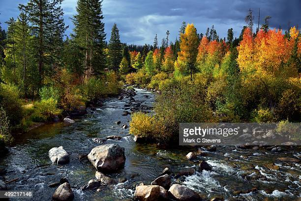 Colorful Aspens and evergreens along the Colorado River